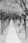 Approach to Langemark German cemetery